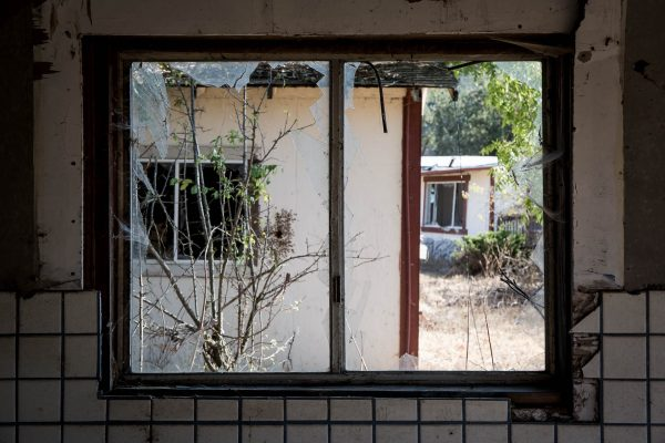 Window_bees