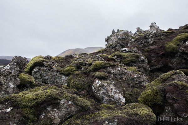 Lava Rock and moss-7
